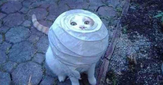 kat-in-lamp