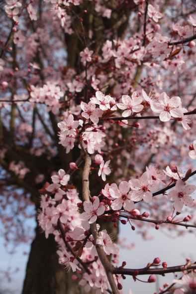 flowers spring tree blooming