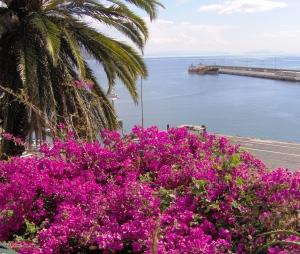 bloemen op Madeira